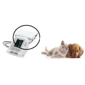 Migliori sfigmomanometri per gatti